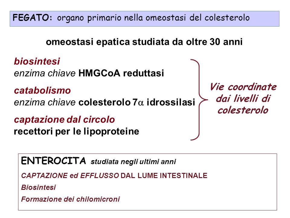 biosintesi enzima chiave HMGCoA reduttasi catabolismo enzima chiave colesterolo 7 idrossilasi captazione dal circolo recettori per le lipoproteine FEG