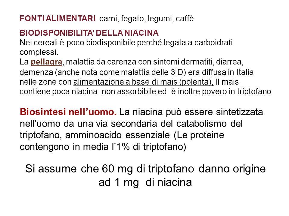 FONTI ALIMENTARI carni, fegato, legumi, caffè BIODISPONIBILITA DELLA NIACINA Nei cereali è poco biodisponibile perché legata a carboidrati complessi.