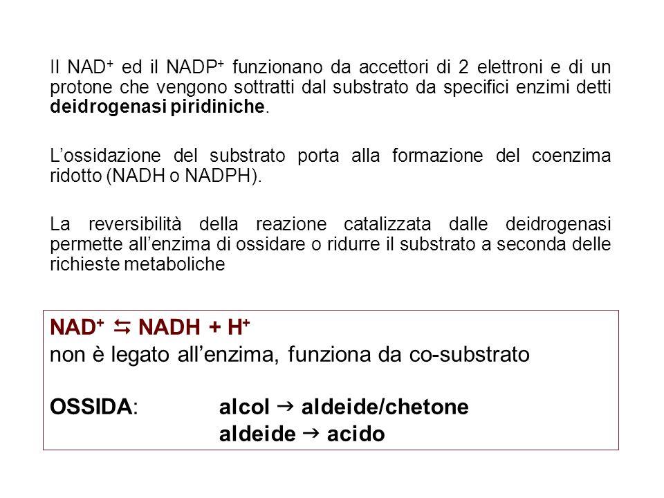 Il NAD + ed il NADP + funzionano da accettori di 2 elettroni e di un protone che vengono sottratti dal substrato da specifici enzimi detti deidrogenas
