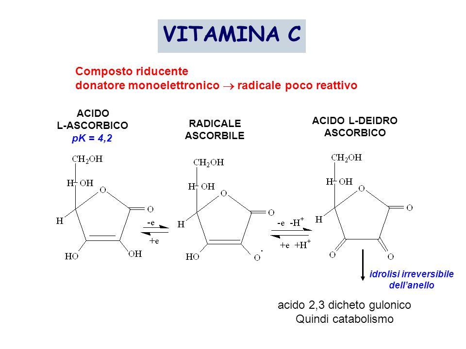 VITAMINA C Composto riducente donatore monoelettronico radicale poco reattivo ACIDO L-ASCORBICO pK = 4,2 RADICALE ASCORBILE ACIDO L-DEIDRO ASCORBICO a