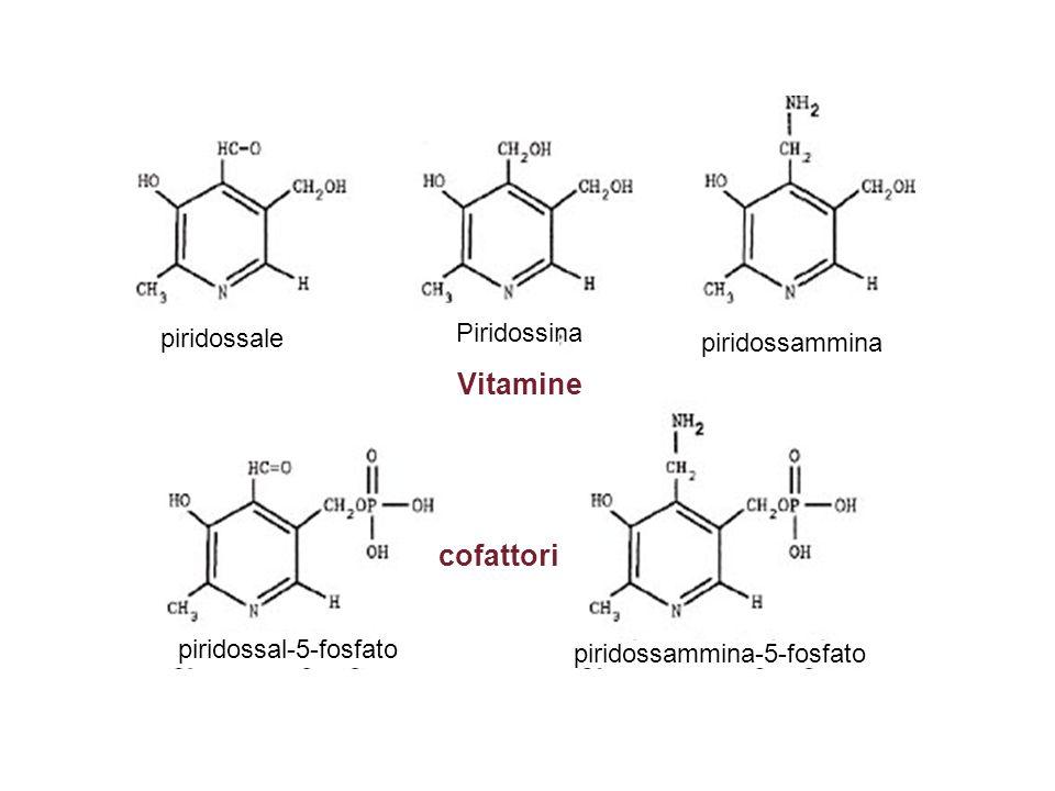 piridossammina piridossale Piridossina Vitamine piridossal-5-fosfato piridossammina-5-fosfato cofattori