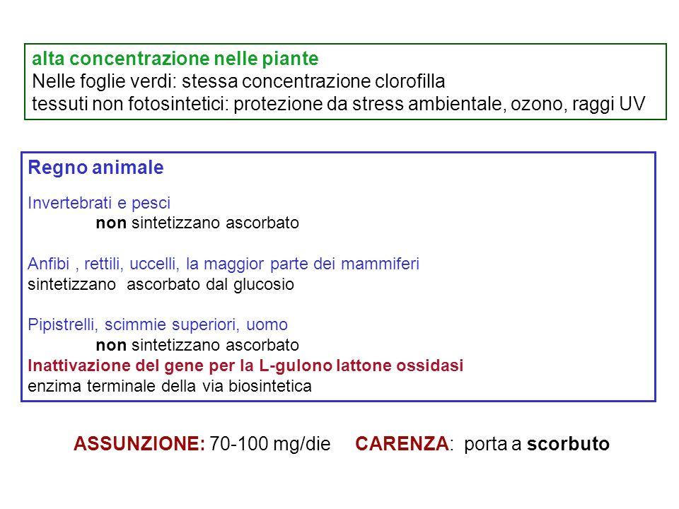 alta concentrazione nelle piante Nelle foglie verdi: stessa concentrazione clorofilla tessuti non fotosintetici: protezione da stress ambientale, ozon