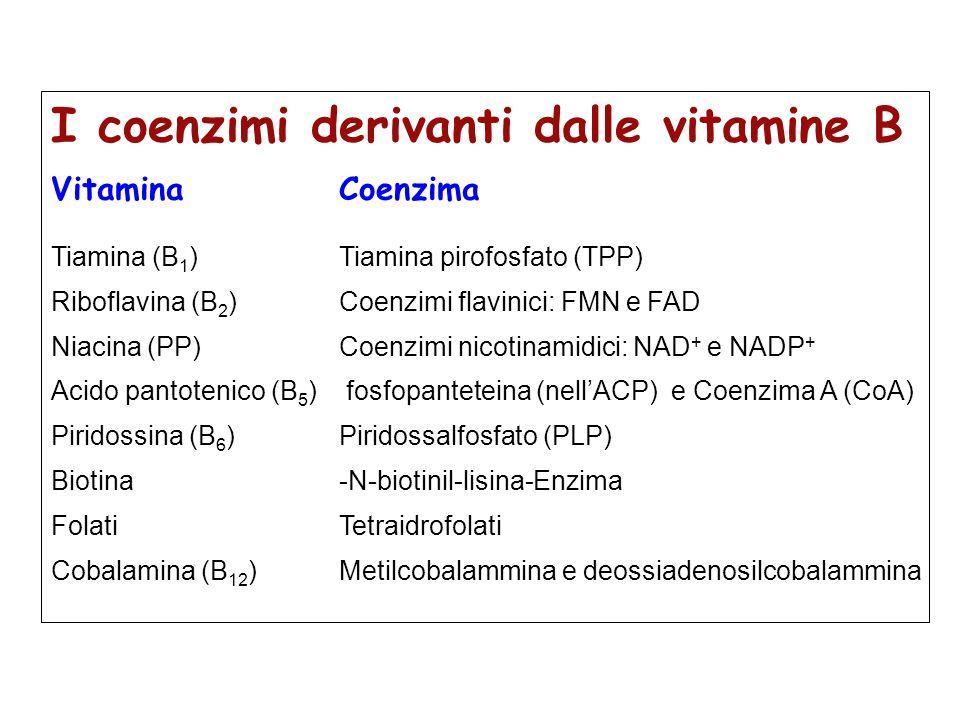 I coenzimi derivanti dalle vitamine B Vitamina Coenzima Tiamina (B 1 )Tiamina pirofosfato (TPP) Riboflavina (B 2 )Coenzimi flavinici: FMN e FAD Niacin