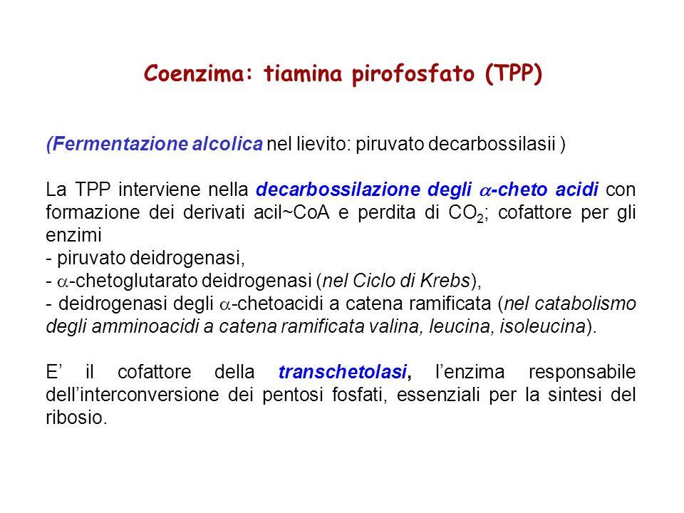 Coenzima: tiamina pirofosfato (TPP) (Fermentazione alcolica nel lievito: piruvato decarbossilasii ) La TPP interviene nella decarbossilazione degli -c