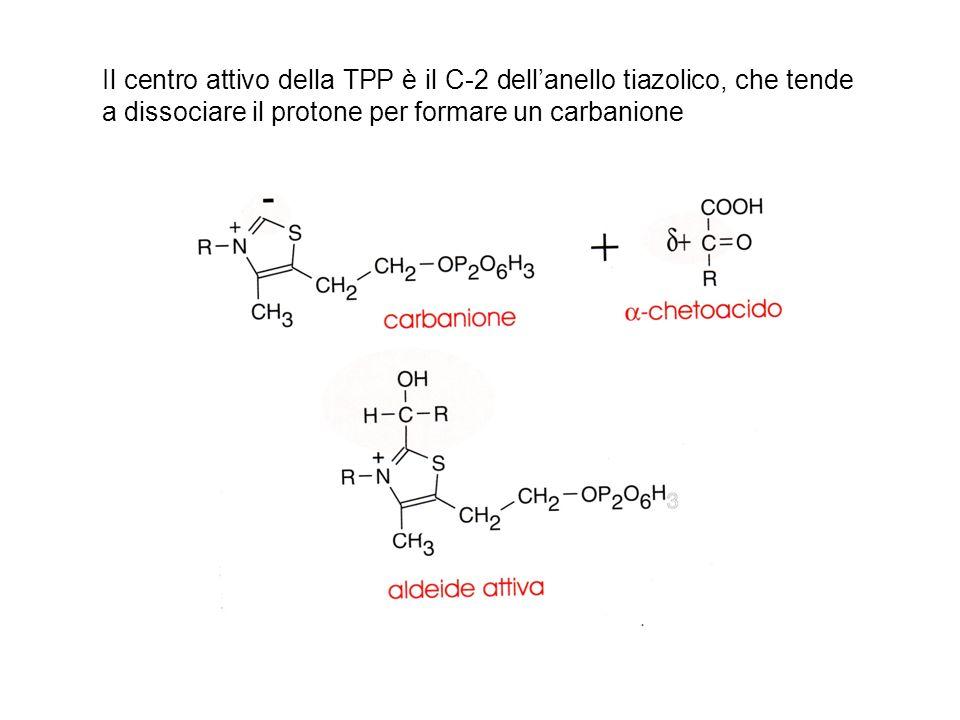 Il centro attivo della TPP è il C-2 dellanello tiazolico, che tende a dissociare il protone per formare un carbanione