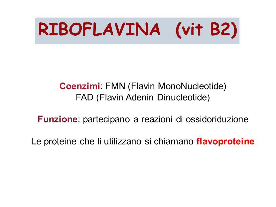 Coenzimi: FMN (Flavin MonoNucleotide) FAD (Flavin Adenin Dinucleotide) Funzione: partecipano a reazioni di ossidoriduzione Le proteine che li utilizza