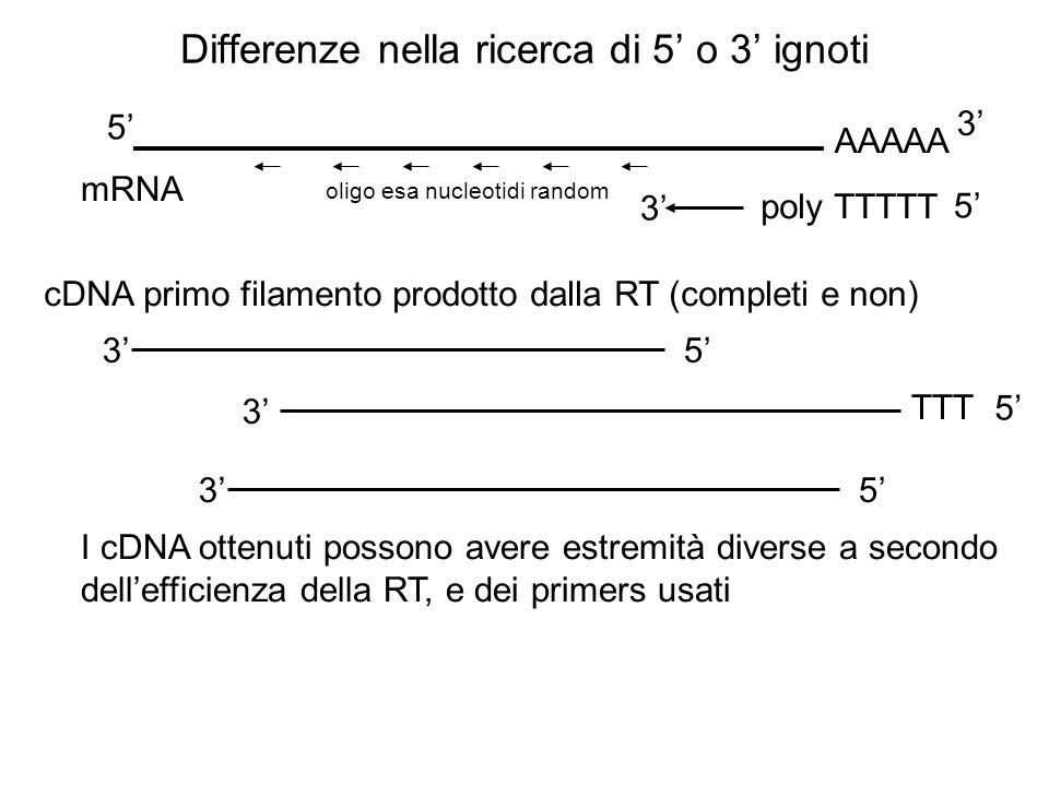 Differenze nella ricerca di 5 o 3 ignoti mRNA AAAAA 5 3 poly TTTTT 5 3 oligo esa nucleotidi random cDNA primo filamento prodotto dalla RT (completi e