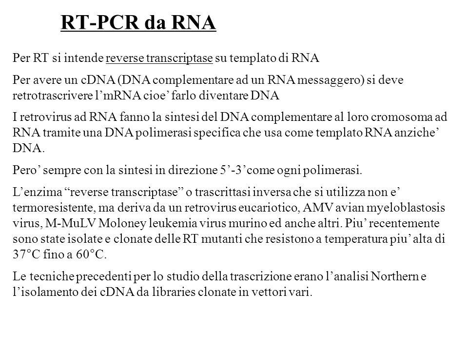 Per RT si intende reverse transcriptase su templato di RNA Per avere un cDNA (DNA complementare ad un RNA messaggero) si deve retrotrascrivere lmRNA c