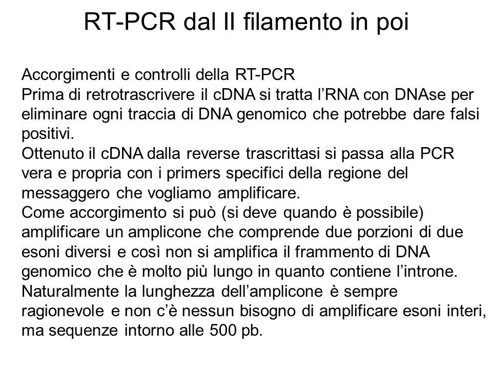 RT-PCR dal II filamento in poi Accorgimenti e controlli della RT-PCR Prima di retrotrascrivere il cDNA si tratta lRNA con DNAse per eliminare ogni tra