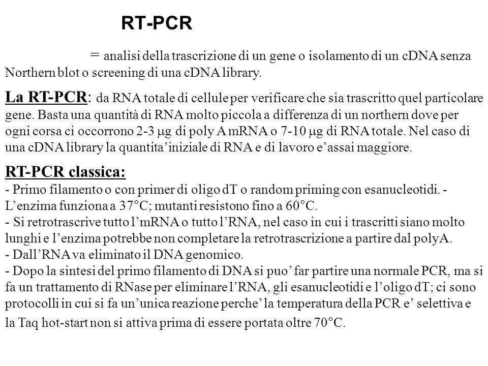 Accorgimento: quando si estrae lRNA si deve evitare il DNA e si puo fare un trattamento di DNAse, e/o scegliere i primers a cavallo di due esoni I filamento con rev transcript.