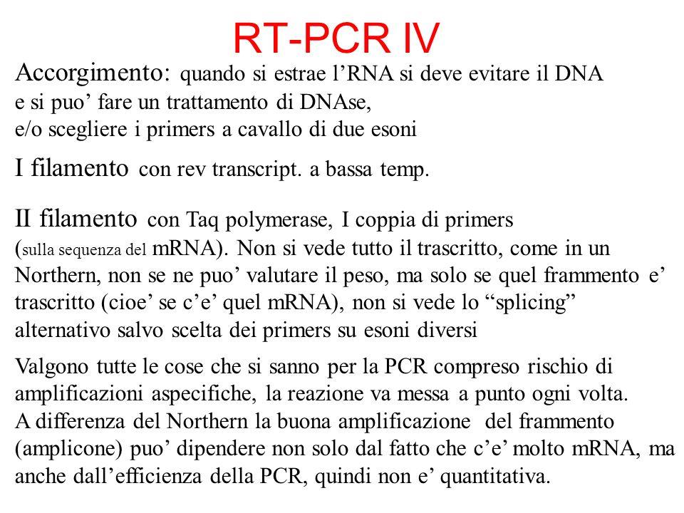 Accorgimento: quando si estrae lRNA si deve evitare il DNA e si puo fare un trattamento di DNAse, e/o scegliere i primers a cavallo di due esoni I fil