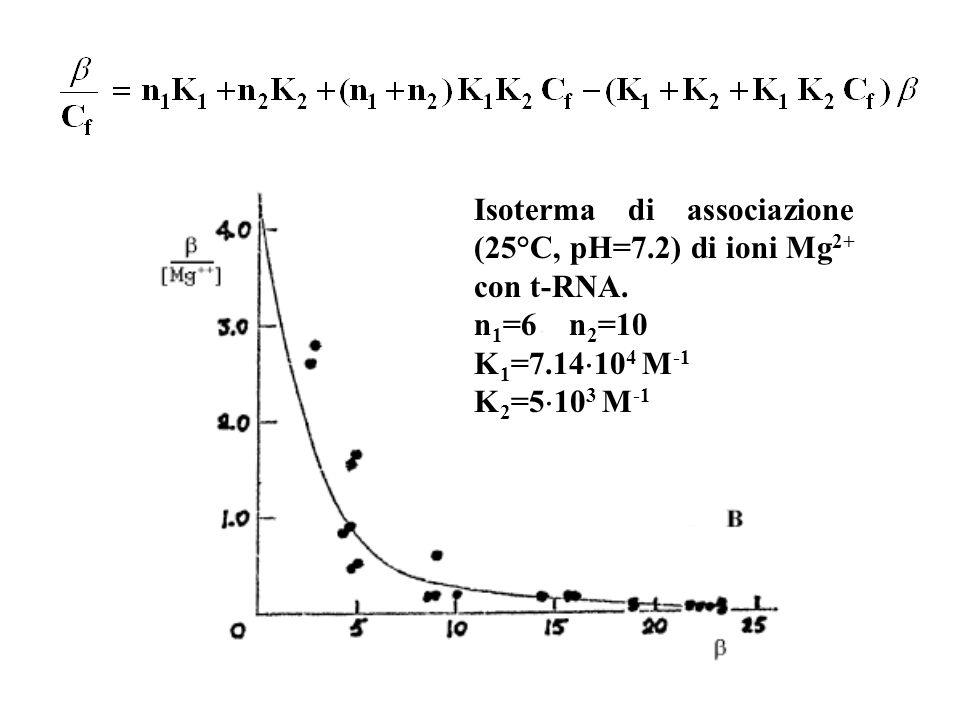 Isoterma di associazione (25°C, pH=7.2) di ioni Mg 2+ con t-RNA. n 1 =6 n 2 =10 K 1 =7.14 10 4 M -1 K 2 =5 10 3 M -1
