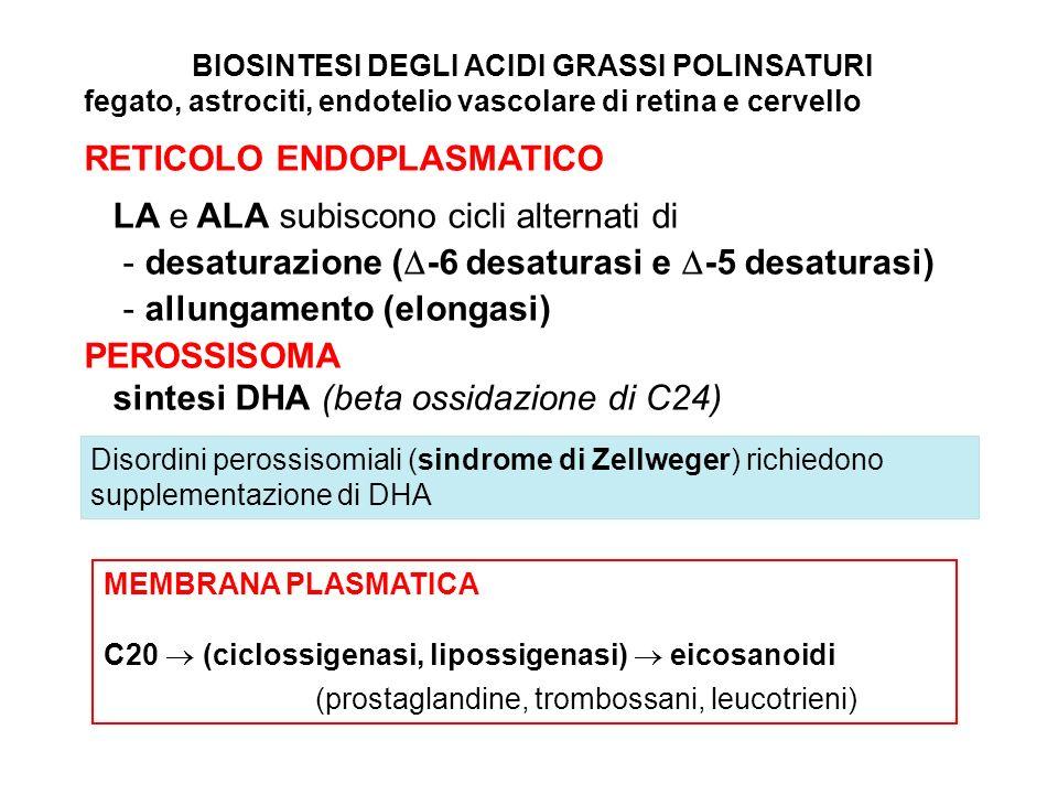 MEMBRANA PLASMATICA C20 (ciclossigenasi, lipossigenasi) eicosanoidi (prostaglandine, trombossani, leucotrieni) BIOSINTESI DEGLI ACIDI GRASSI POLINSATURI fegato, astrociti, endotelio vascolare di retina e cervello RETICOLO ENDOPLASMATICO LA e ALA subiscono cicli alternati di - desaturazione ( -6 desaturasi e -5 desaturasi) - allungamento (elongasi) PEROSSISOMA sintesi DHA (beta ossidazione di C24) Disordini perossisomiali (sindrome di Zellweger) richiedono supplementazione di DHA