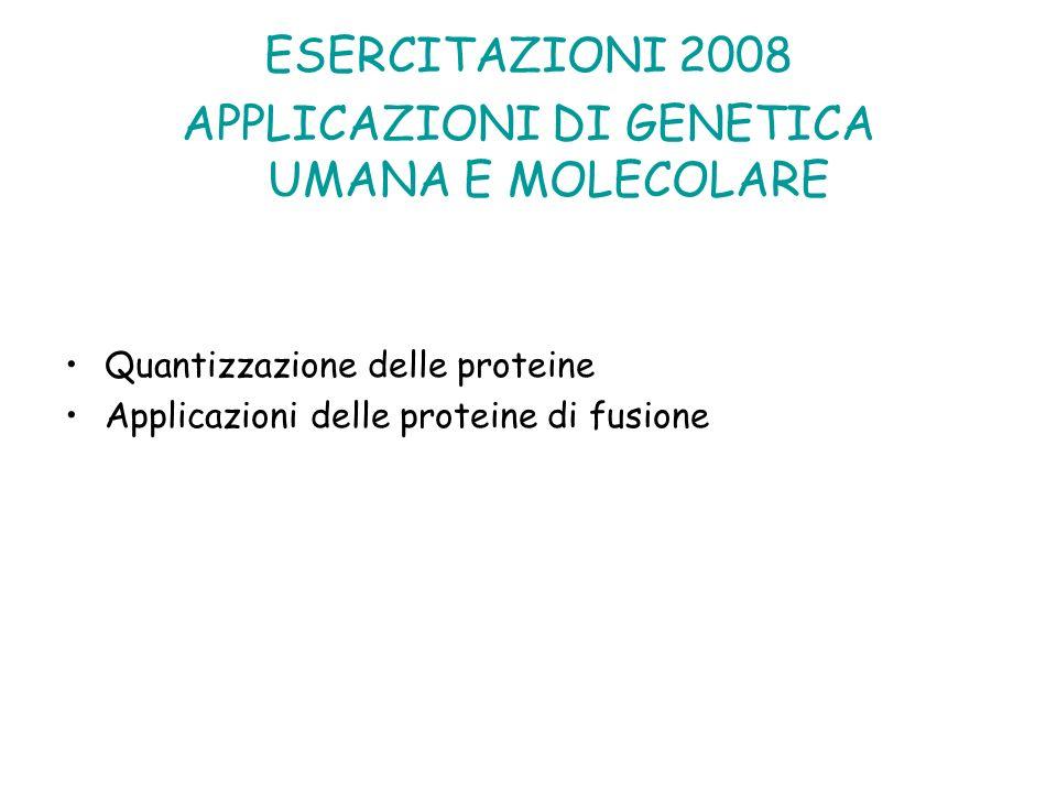 ESERCITAZIONI 2008 APPLICAZIONI DI GENETICA UMANA E MOLECOLARE Quantizzazione delle proteine Applicazioni delle proteine di fusione