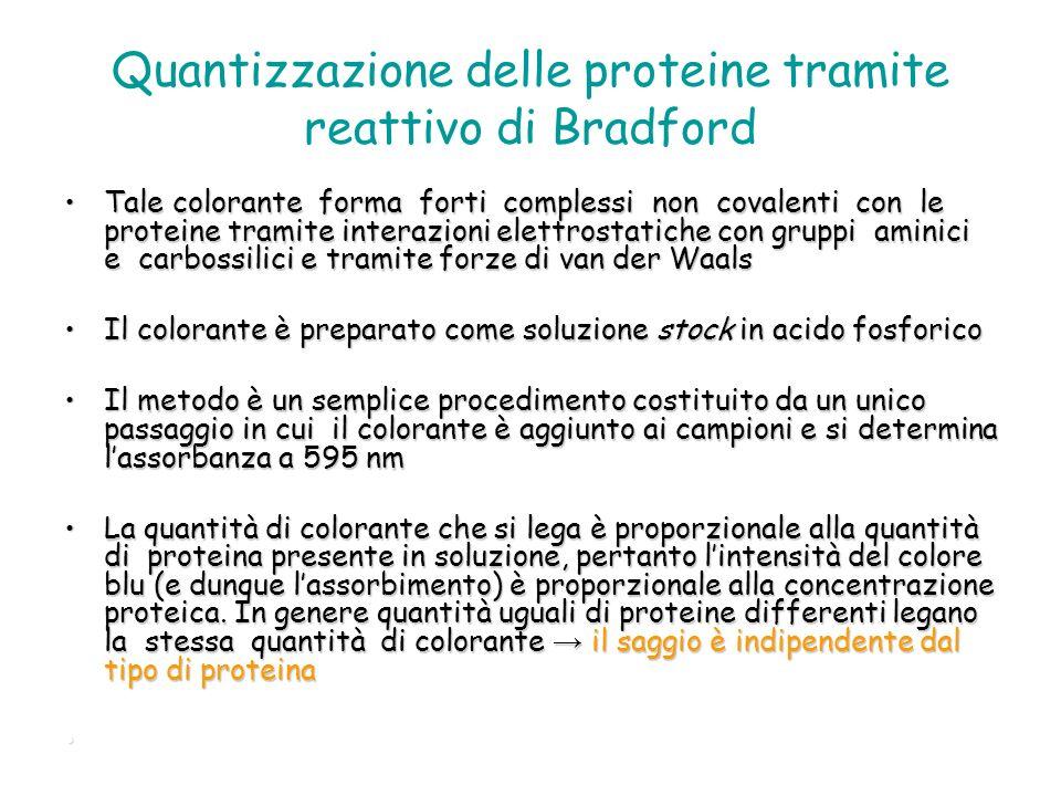 Quantizzazione delle proteine tramite reattivo di Bradford Tale colorante forma forti complessi non covalenti con le proteine tramite interazioni elet