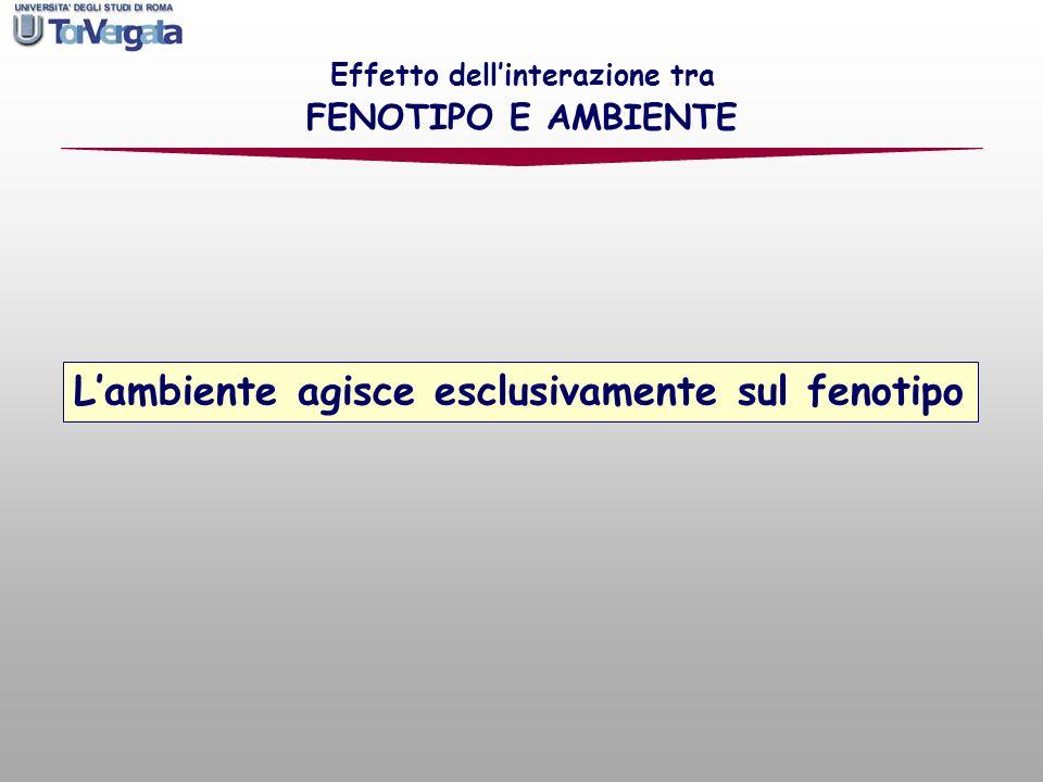 Effetto dellinterazione tra FENOTIPO E AMBIENTE Lambiente agisce esclusivamente sul fenotipo