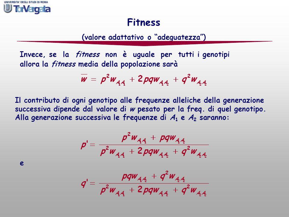 allora la fitness media della popolazione sarà Il contributo di ogni genotipo alle frequenze alleliche della generazione successiva dipende dal valore