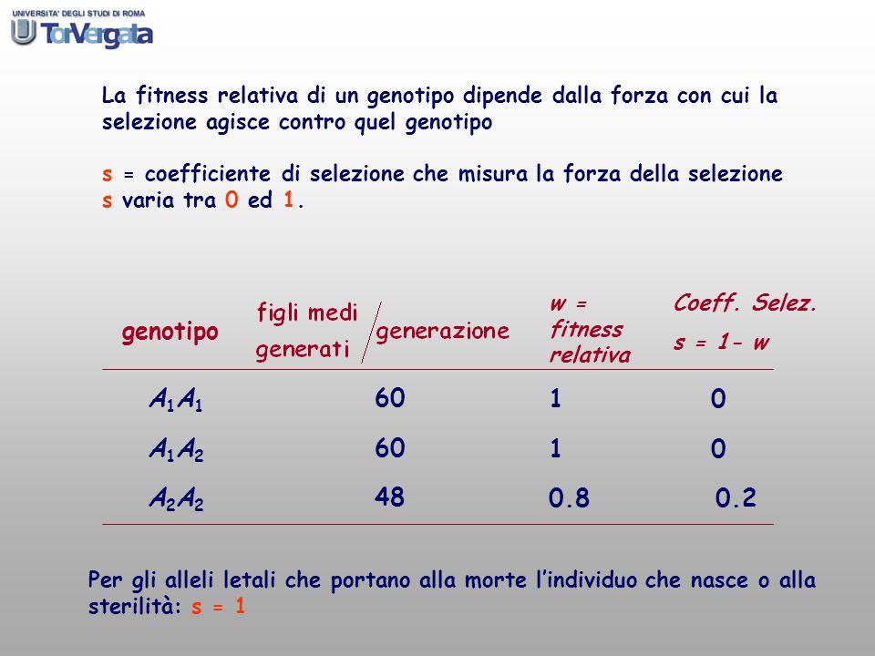La fitness relativa di un genotipo dipende dalla forza con cui la selezione agisce contro quel genotipo s = coefficiente di selezione che misura la fo