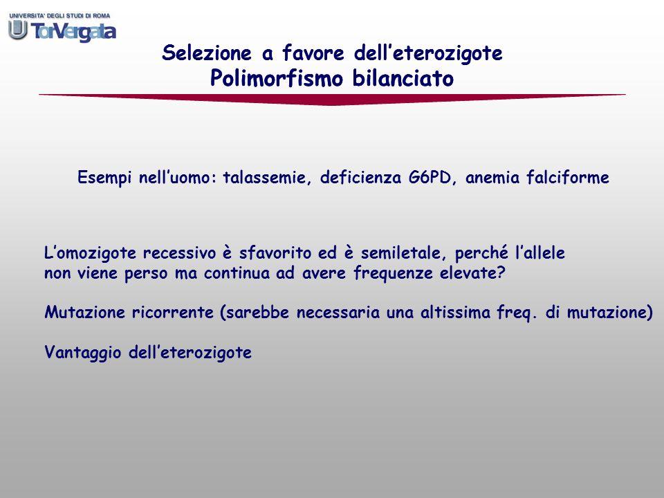 Selezione a favore delleterozigote Polimorfismo bilanciato Esempi nelluomo: talassemie, deficienza G6PD, anemia falciforme Lomozigote recessivo è sfav