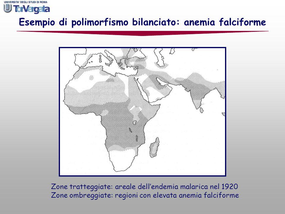 Esempio di polimorfismo bilanciato: anemia falciforme Zone tratteggiate: areale dellendemia malarica nel 1920 Zone ombreggiate: regioni con elevata an