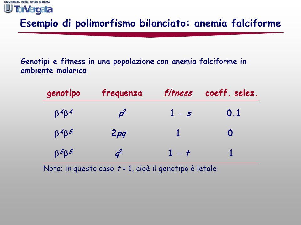 genotipo frequenza fitness coeff. selez. A A p 2 1 s 0.1 A S 2pq 1 0 S S q 2 1 t 1 Nota: in questo caso t = 1, cioè il genotipo è letale Esempio di po