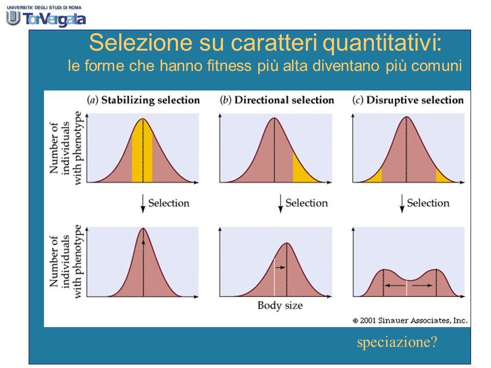 Selezione su caratteri quantitativi: leforme che hanno fitnesspiù alta diventano più comuni speciazione?