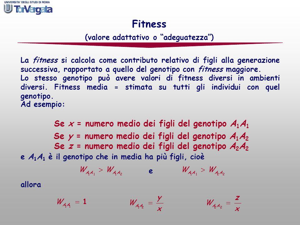 La fitness si calcola come contributo relativo di figli alla generazione successiva, rapportato a quello del genotipo con fitness maggiore. Lo stesso