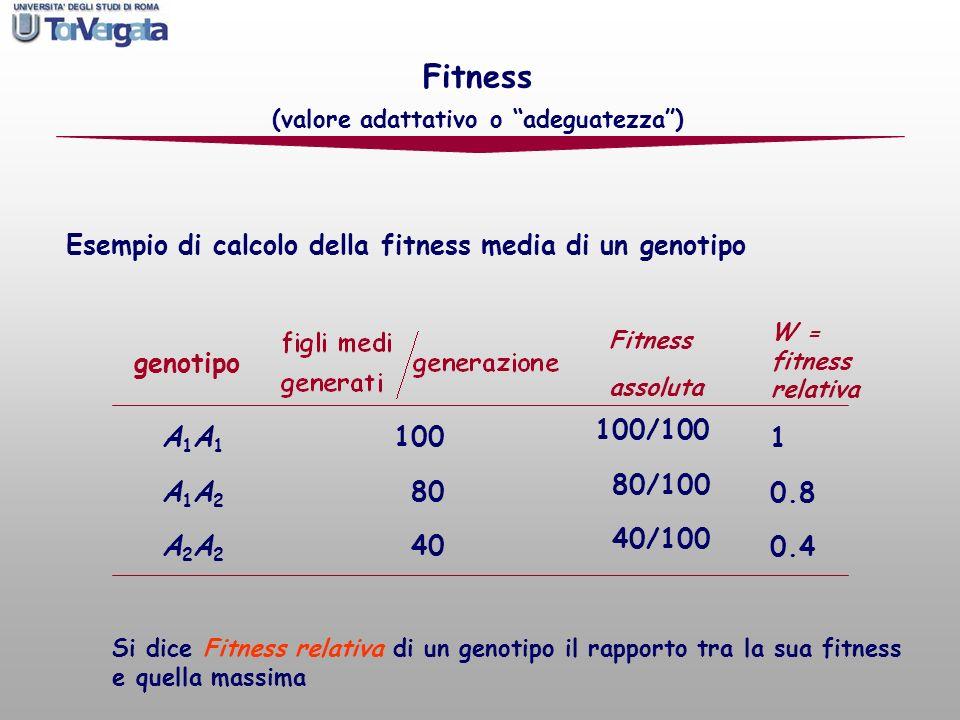Esempio di calcolo della fitness media di un genotipo Fitness (valore adattativo o adeguatezza) genotipo A1A1A1A2A2A2A1A1A1A2A2A2 100 80 40 Fitness as