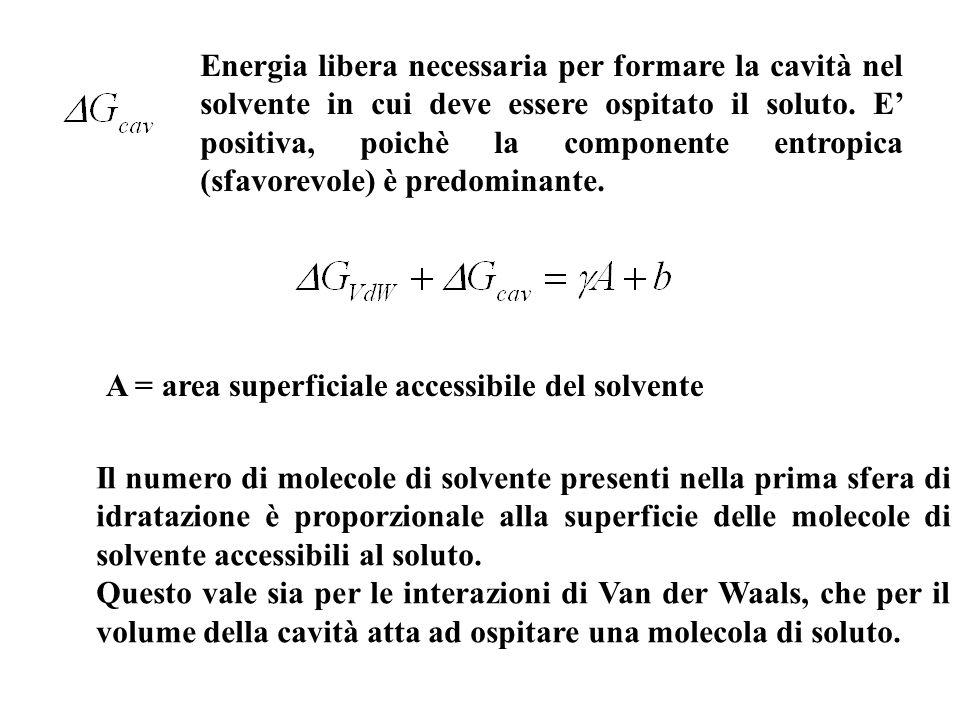 A = area superficiale accessibile del solvente Il numero di molecole di solvente presenti nella prima sfera di idratazione è proporzionale alla superficie delle molecole di solvente accessibili al soluto.