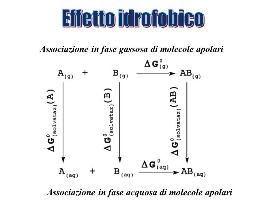 Associazione in fase gassosa di molecole apolari Associazione in fase acquosa di molecole apolari