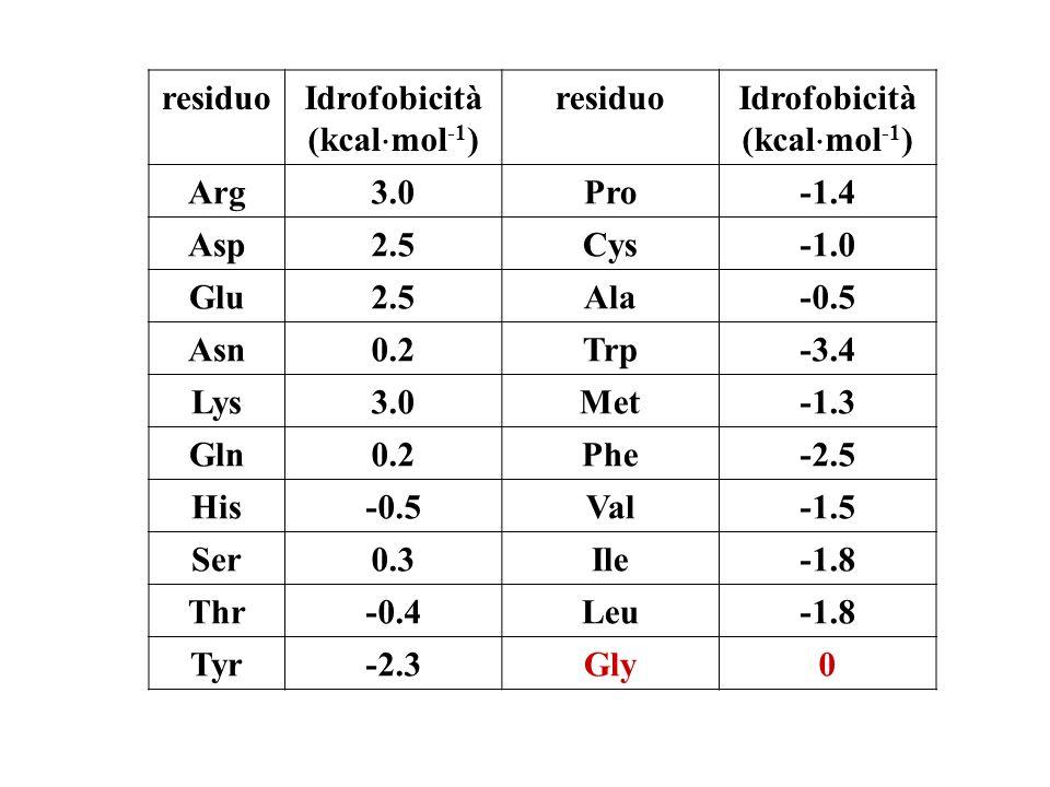 residuoIdrofobicità (kcal mol -1 ) residuoIdrofobicità (kcal mol -1 ) Arg3.0Pro-1.4 Asp2.5Cys Glu2.5Ala-0.5 Asn0.2Trp-3.4 Lys3.0Met-1.3 Gln0.2Phe-2.5 His-0.5Val-1.5 Ser0.3Ile-1.8 Thr-0.4Leu-1.8 Tyr-2.3Gly0