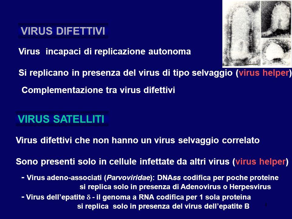 4 Virus incapaci di replicazione autonoma Si replicano in presenza del virus di tipo selvaggio (virus helper) VIRUS DIFETTIVI Virus difettivi che non