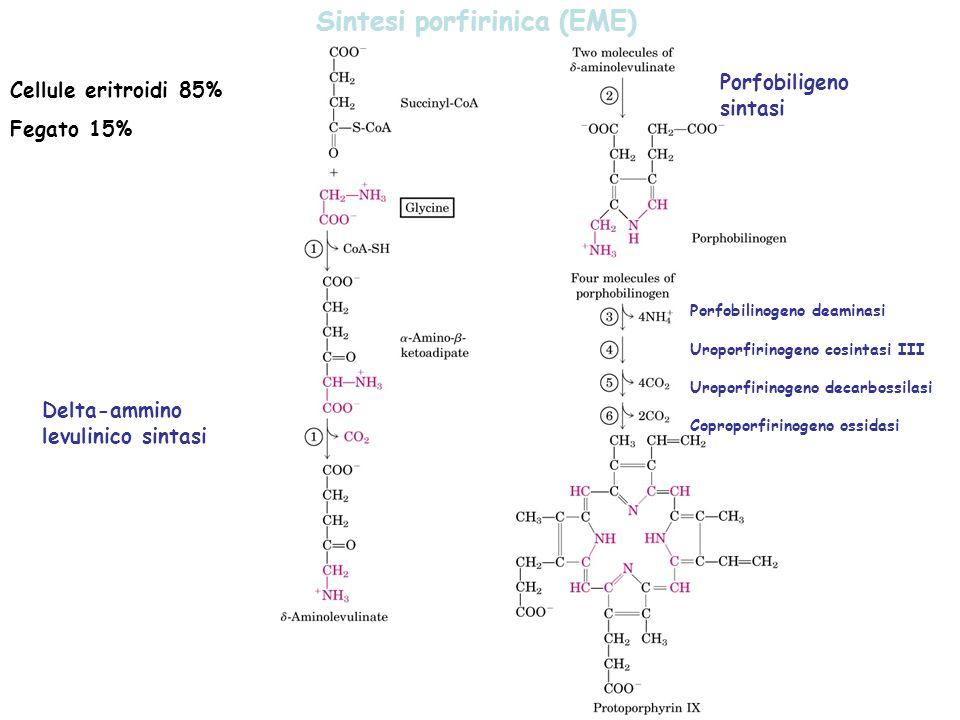Sintesi porfirinica (EME) Cellule eritroidi 85% Fegato 15% Delta-ammino levulinico sintasi Porfobiligeno sintasi Porfobilinogeno deaminasi Uroporfirinogeno cosintasi III Uroporfirinogeno decarbossilasi Coproporfirinogeno ossidasi