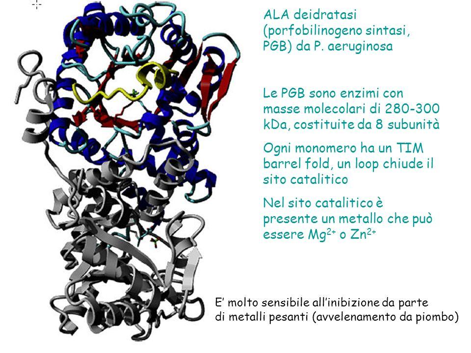 ALA deidratasi (porfobilinogeno sintasi, PGB) da P.