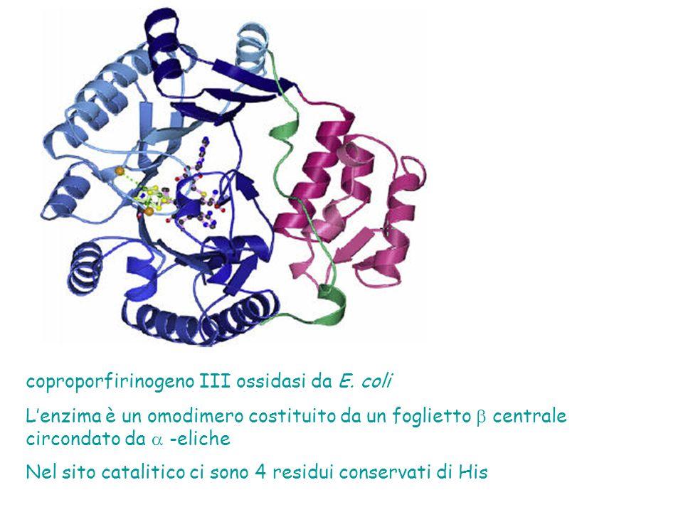 coproporfirinogeno III ossidasi da E.