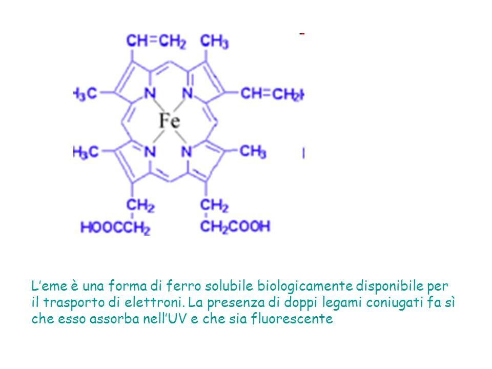 Leme è una forma di ferro solubile biologicamente disponibile per il trasporto di elettroni.