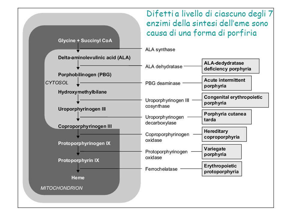 Difetti a livello di ciascuno degli 7 enzimi della sintesi delleme sono causa di una forma di porfiria