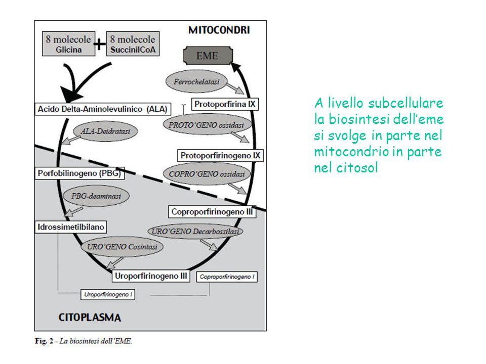 A livello subcellulare la biosintesi delleme si svolge in parte nel mitocondrio in parte nel citosol