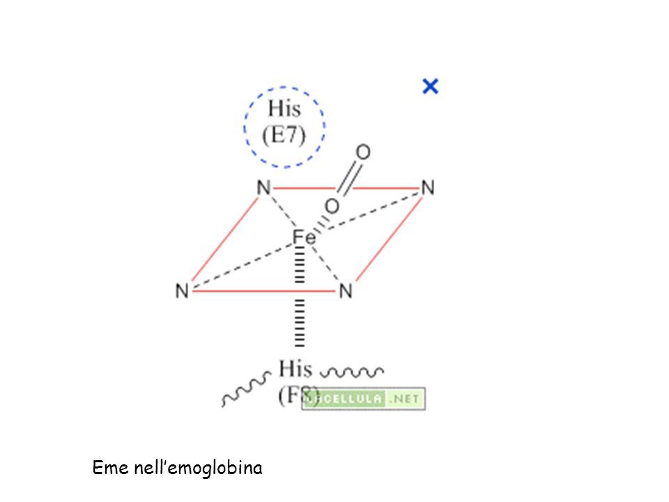 Eme nellemoglobina