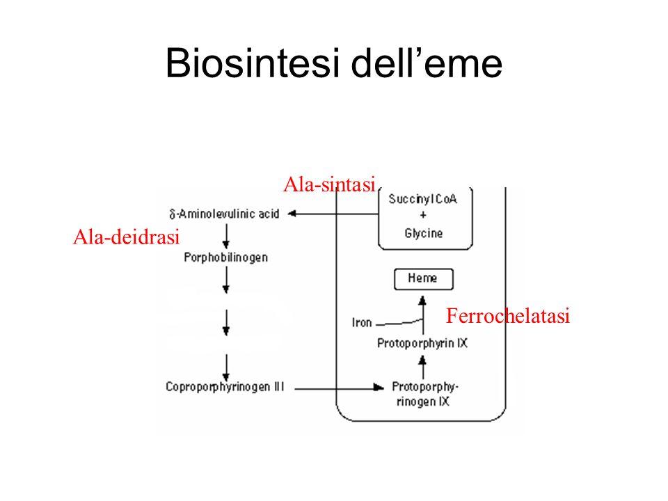 Biosintesi delleme Ala-sintasi Ala-deidrasi Ferrochelatasi