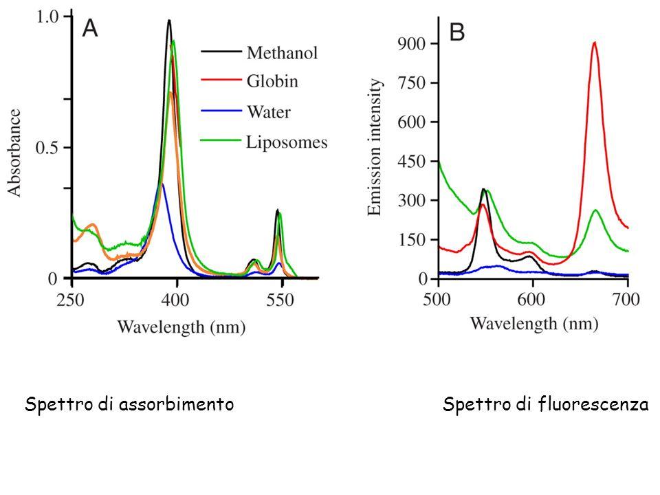 Spettro di assorbimento Spettro di fluorescenza
