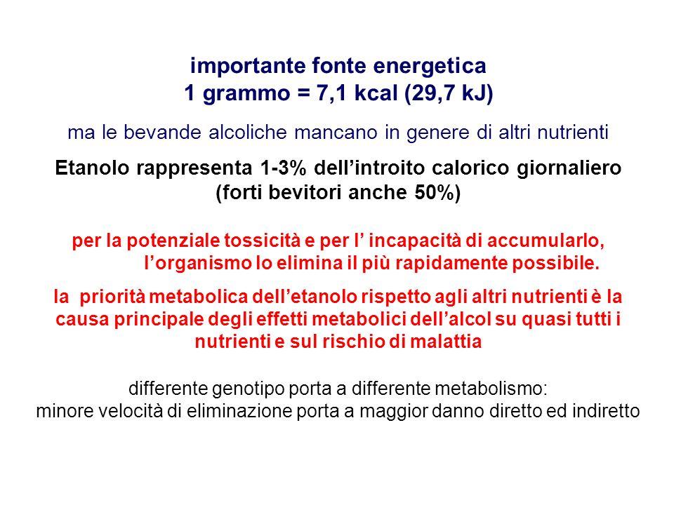 importante fonte energetica 1 grammo = 7,1 kcal (29,7 kJ) ma le bevande alcoliche mancano in genere di altri nutrienti Etanolo rappresenta 1-3% dellin