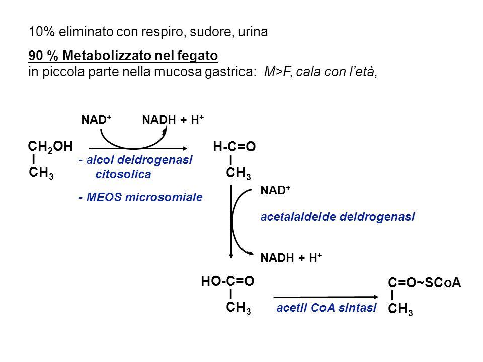 EFFETTI TOSSICI DA ABUSO - - AZIONE DIRETTA DELLACETALDEIDE: - alterazione fluidità di membrana - - tossicità da acetaldeide (addotti con proteine, produzione di radicali, perossidazione lipidica Conseguenze a lungo termine Danno cellule intestinali (gastrite alcolica, malassorbimento per danno diretto o indiretto per alterati enzimi) Danno epatico - alterato metabolismo vitaminico e carenza vitaminica diffusa; in particolare Folati per diminuito assorbimento ed ossidazione epatica Tiamina sindrome di Wernicke- Korsakoff Vitamina A ha in comune alcune fasi metaboliche con lalcol con aumento del catabolismo a causa dellinduzione del MEOS Vitamina E aumento del fabbisogno per maggiore perossidazione lipidica indotta dallalcol