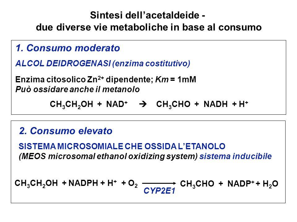 1. Consumo moderato ALCOL DEIDROGENASI (enzima costitutivo) Enzima citosolico Zn 2+ dipendente; Km = 1mM Può ossidare anche il metanolo CH 3 CH 2 OH +