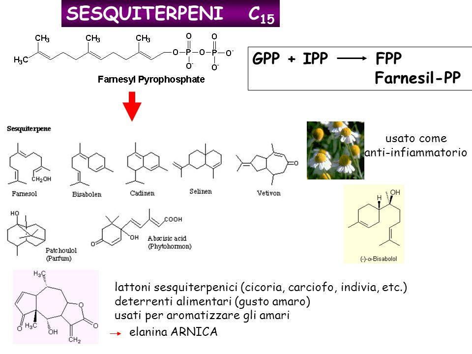SESQUITERPENI C 15 GPP + IPP FPP Farnesil-PP usato come anti-infiammatorio lattoni sesquiterpenici (cicoria, carciofo, indivia, etc.) deterrenti alime