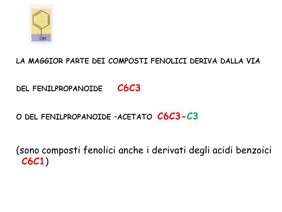 LA MAGGIOR PARTE DEI COMPOSTI FENOLICI DERIVA DALLA VIA DEL FENILPROPANOIDE C6C3 O DEL FENILPROPANOIDE –ACETATO C6C3-C3 (sono composti fenolici anche i derivati degli acidi benzoici C6C1)