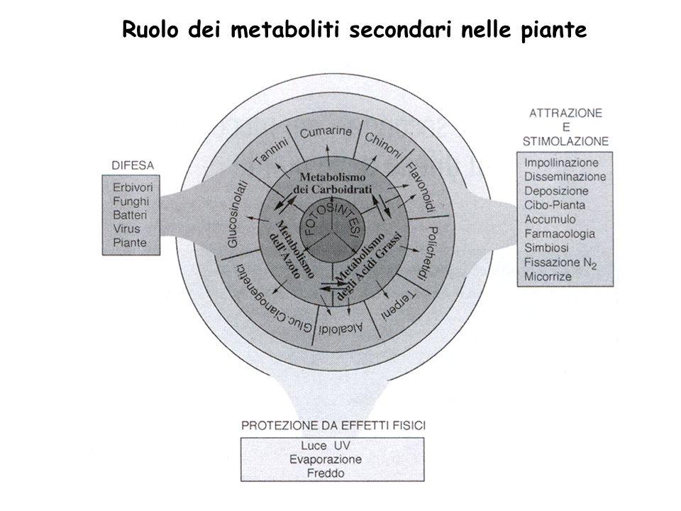 Le vie biochimiche che portano alla biosintesi delle varie classi di composti fenolici hanno molte caratteristiche comuni L enzima PAL: Fenilalanina ammonioliasi è lenzima centrale nella sintesi dei composti fenolici