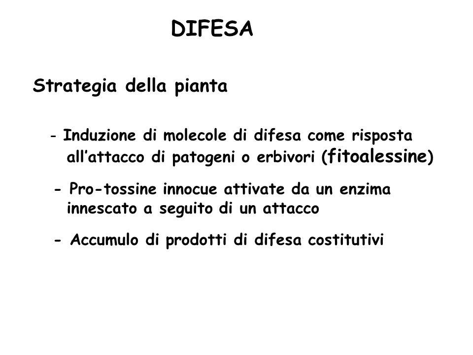 Pianta - Erbivoro produzione di sostanze deterrenti alimentari (tannini; sostanze tossiche) produzione di sostanze che mimano ormoni animali (steroli prodotti dalla pianta mimano lormone della muta) produzione di composti che attraggono i predatori degli erbivori