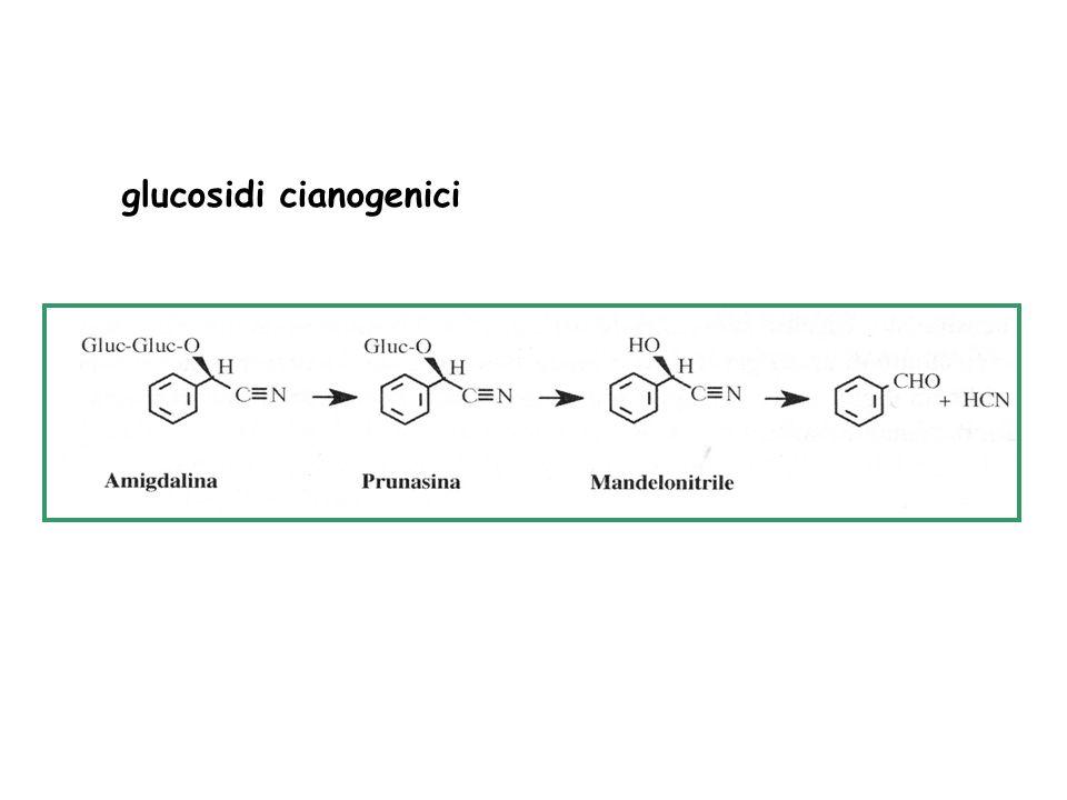 Composti fenolici semplici C6C3
