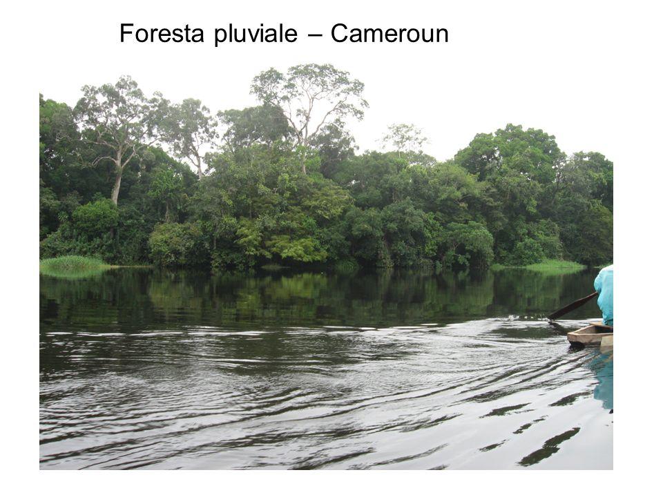 Foresta pluviale – Cameroun
